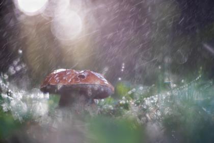boletus-nella-pioggia