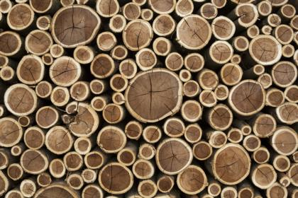 catasta-tronchi-legna