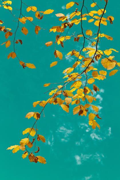 foglie-sul-lago