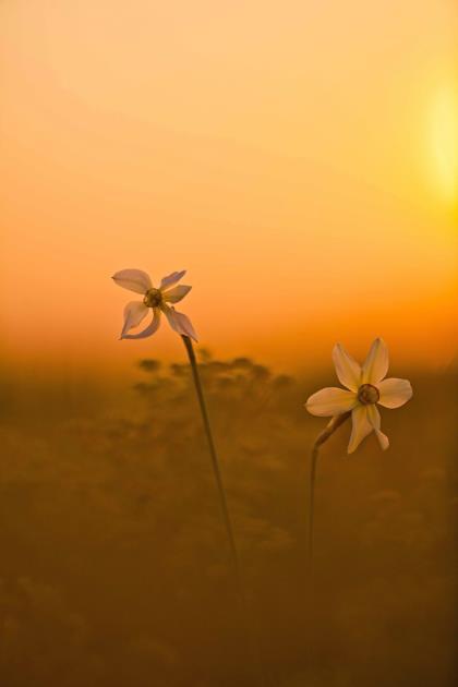 I-colori-del-tramonto