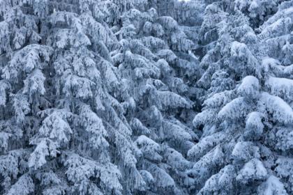 l' inverno