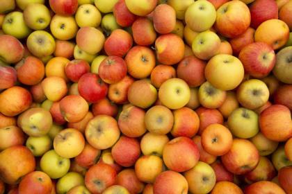 Le-mele-di-Carnia