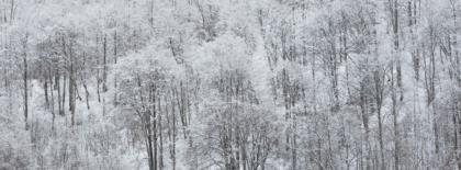 nel bosco fatato