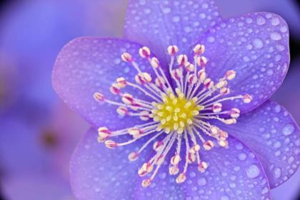 polline-e-pistilli
